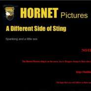 Hornet Pictures